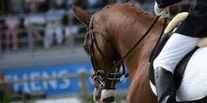 egvklmoie5gjn53oihy58inht5ith34octhto4nihu thn 300x150 ورزش جذاب اسب سواری